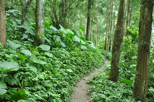 通往雲森瀑布的山徑