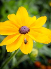 The Pollenholic