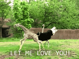 let me love you ostrich and giraffe flickr photo