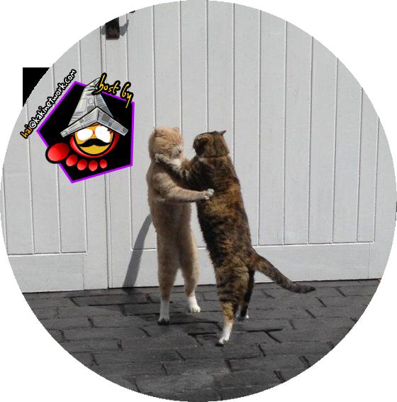gambar kucing lawak 01