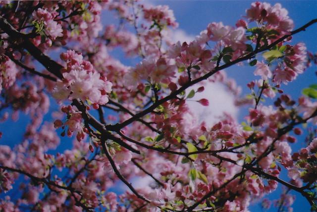 spring19