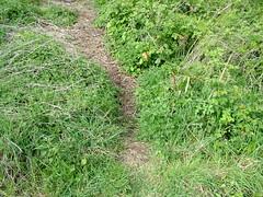 Cache path
