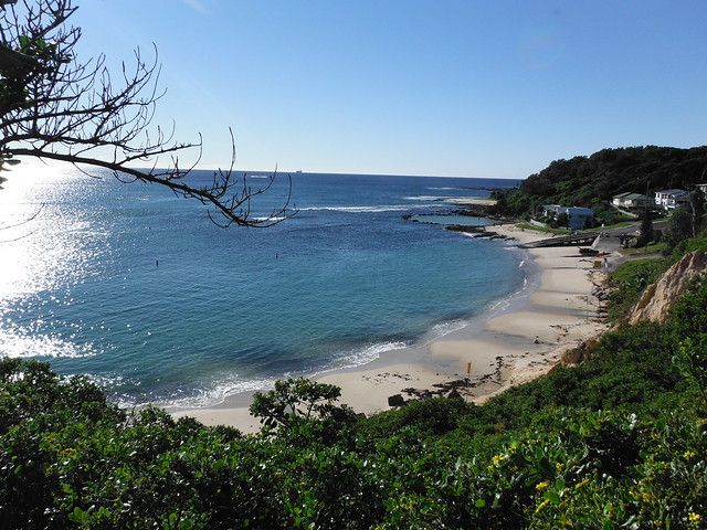 cabbage tree bay