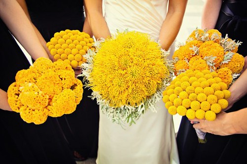 yellow_flowers_1
