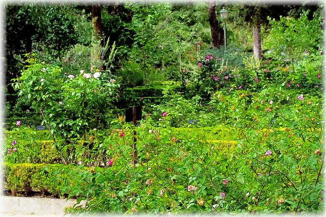 En el jard n de las maravillas flickr photo sharing for Bazzel el jardin de los secretos