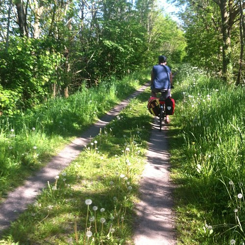 Bicycle adventure day 2: Middelfart to Odense. The last part was straight out of a fairy tale -- all lush forest and dandelion path.