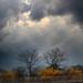 Storm coming by beckstei
