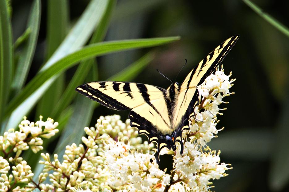 052212_butterfly