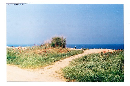 film zenit crimea