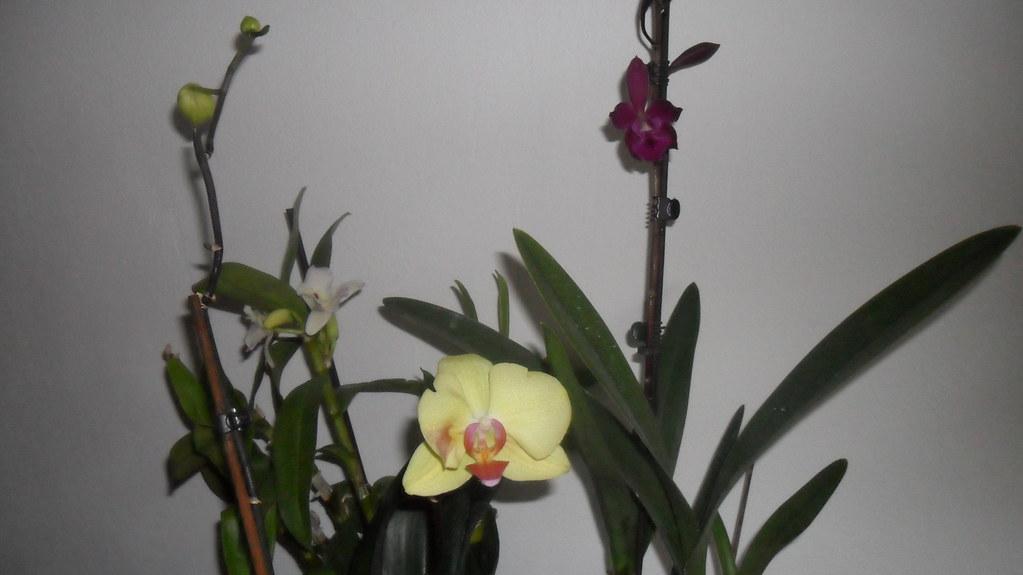 Orhideele lui Victor - Pagina 6 7306233442_df41fccc94_b