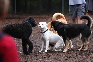 Dog_Park002