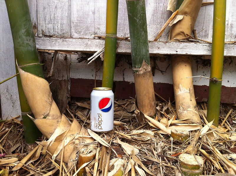 Bamboo stalk vs soda can