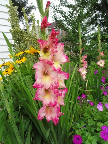 Mom's Yard June 2012 (13)