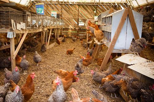 Polyface Farm 2012-0117.jpg