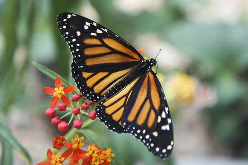 "July 2012 CPM Challenge Photo - 1207 ""Monarch"""