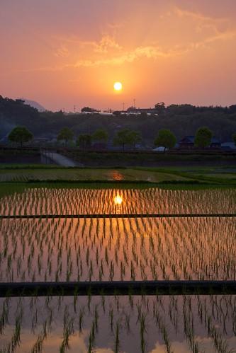 sunset field japan rice sony 日本 kagawa 田んぼ 夕焼け 香川 apsc sel1855 nex7 gettyimagesjapan12q2 gettyimagesjapan12q3 ©jakejung