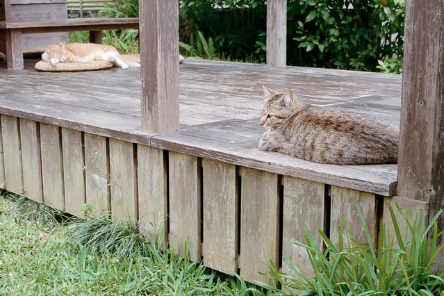 島やさい食堂てぃーあんだの猫 / Cats at Thi-anda
