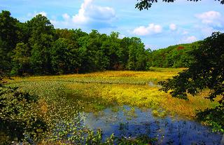 Great Marsh Yellow Flowers