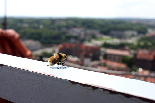 Bumblebee enjoying the view