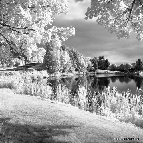 summer blackandwhite bw white reflection 6x6 tlr film nature water grass rural mediumformat reflections square landscape ir photo kodak scanner pennsylvania country hc110 pa filter land infrared epson konica v600 perfection 2012 honesdale 750 80mm selfdeveloped yashicamatem kodakhc110 konicainfrared yashinon80mmf35 750nm konicainfrared750nm konica750nm dyberry epsonv600 epsonperfectionv600photo epsonperfectionv600 bowerr72ir infrared750nm