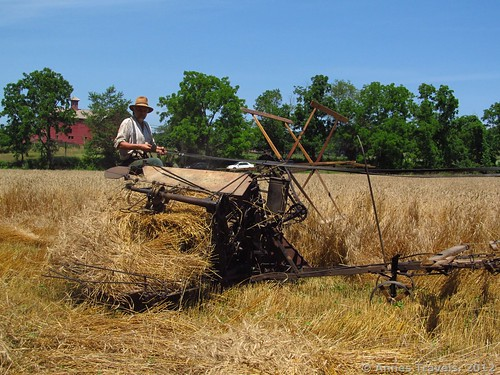 The McCormick Reaper-Binder harvesting wheat at Howell Living History Farm, Lambertville, New Jersey