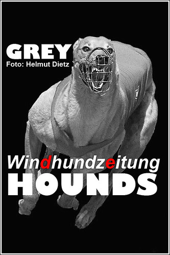 Greyhound Photographer Helmut Dietz, Bielefeld (Germany)