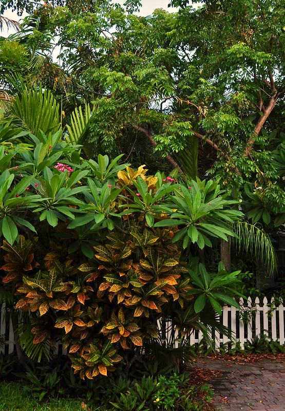 Croton and Plumeria Fence