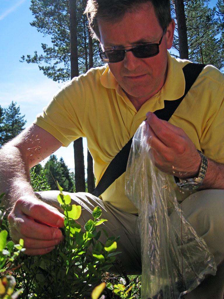 Mälsåkers slott JULI2012 i blåbärsskogen 2