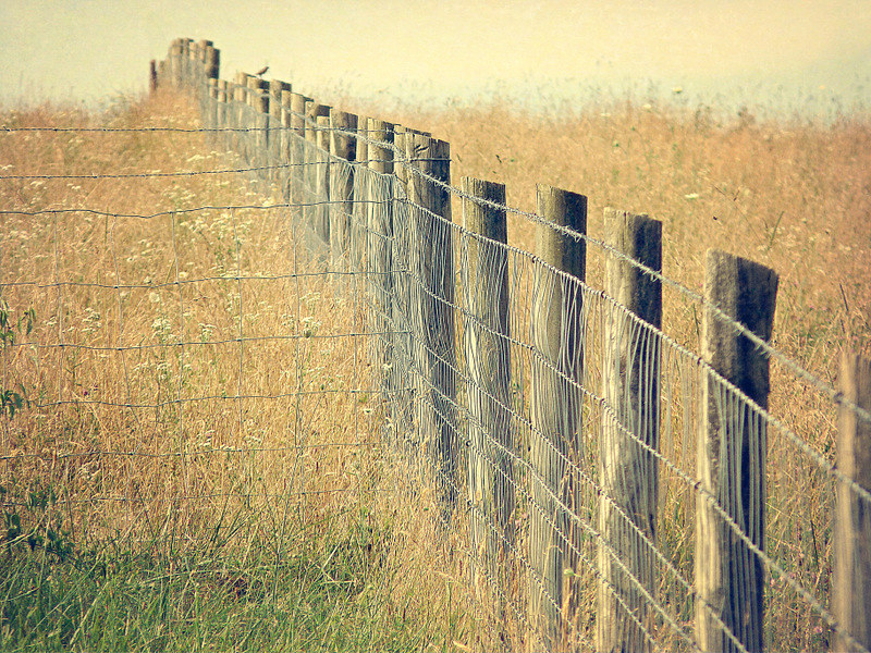 Pastures ~ HFF ~ Happy Fence Friday
