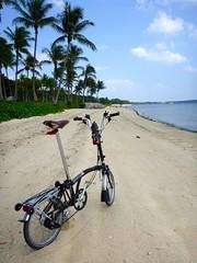 H6R Beach Comber