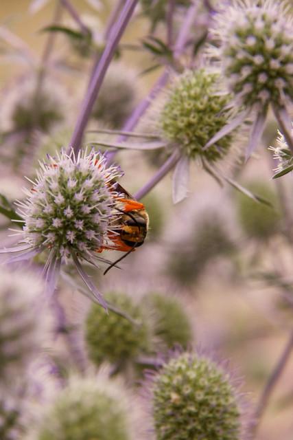 interesting flora 2