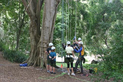 tree climbers 1