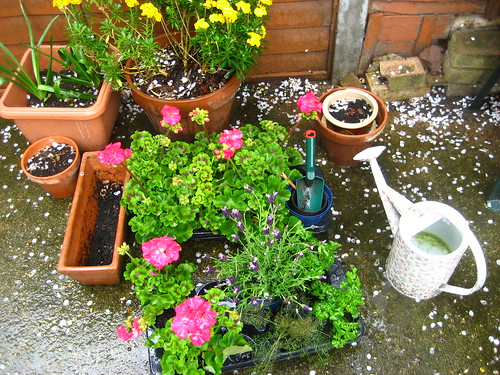 Soggy patio plants, waiting for planting
