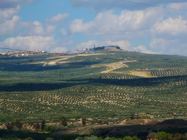 Oliven, Oliven, Baeza, Qualmschlot