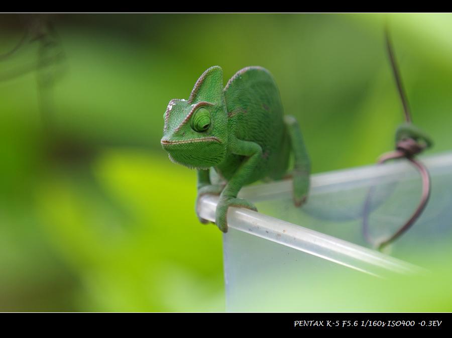 北埔-綠世界