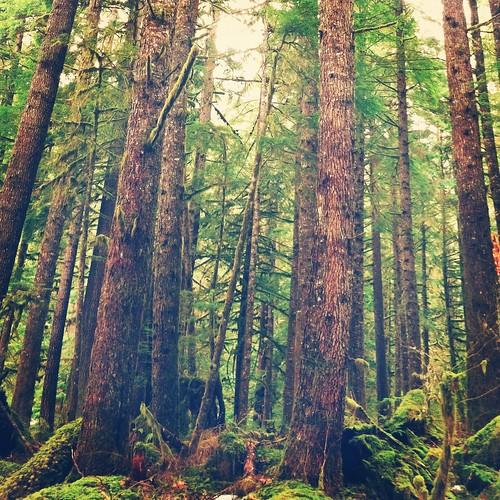 trees winter vacation brown tree green nature colors rain fog forest landscape washington moss scenery state pacific northwest walk branches bark pacificnorthwest layers washingtonstate pnw 2012 ig iphone iphone4 iphonephotography iphoneography iphoneonly instagram jeanamariephotography dancelittlejean