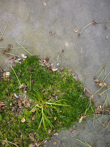 Moss Patch