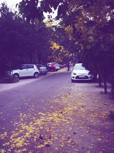autumn trees by ravi1030