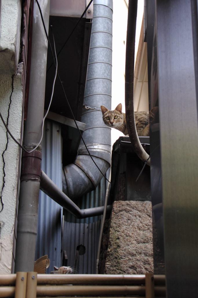 母猫の後を追う子猫