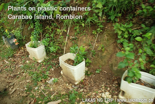How to fund your wanderlust, Planting on Plastic Containers