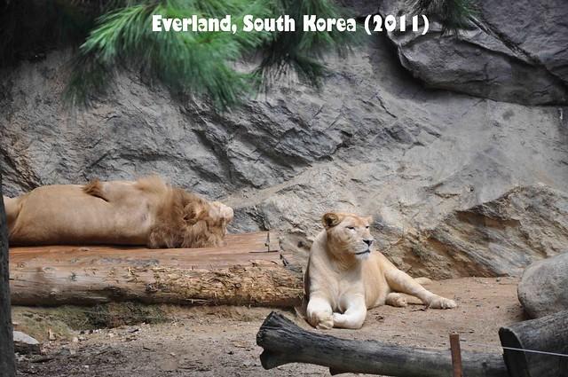 Everland - ZooTopia 03