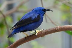 indigo bunting(0.0), green jay(0.0), animal(1.0), branch(1.0), fauna(1.0), bluebird(1.0), beak(1.0), bird(1.0), wildlife(1.0),