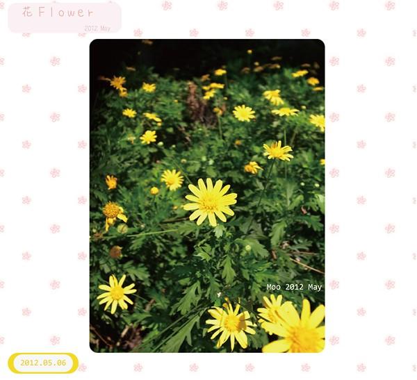10105 花