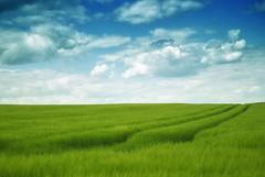 [フリー画像素材] 自然風景, 田園・農場, 草原 ID:201206141200