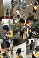 朝散歩とらちゃん (2012/6/10)