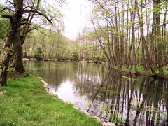nature reserve, wetland, swamp, stream, floodplain, woodland, tree, river, fish pond, riparian forest, body of water, watercourse, bayou, natural environment, reflection, canal, pond, waterway,