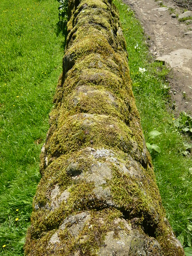 Moss on dry stone wall