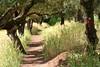 Follow the path.. by areyarey