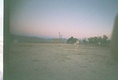 dog sunrise pahrump