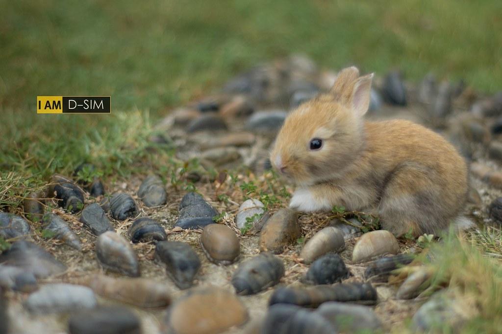 Baby Rabbit (9)